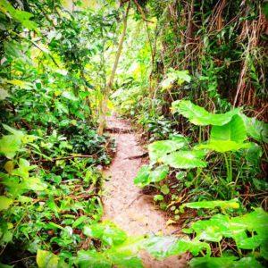 青の洞窟までの道のりは石垣島のジャングル