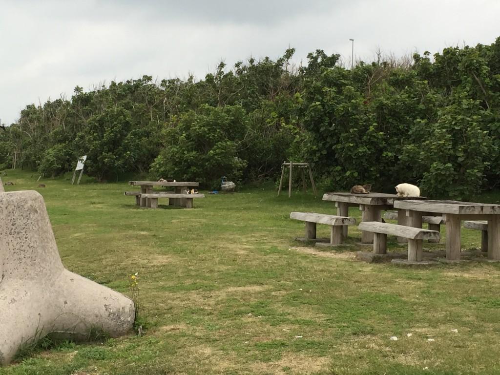 石垣島の猫の島キャットアイランド