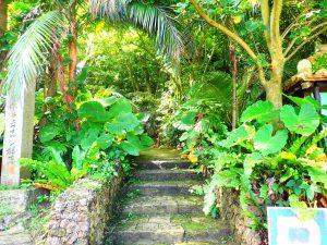 入口はジャングル