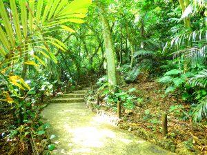 ヤシ群の中は森ジャングルです