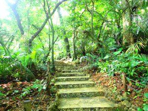 石垣島の貴重な自然