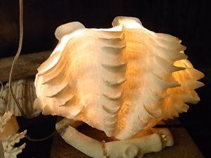 ヒレシャコ貝ランプシェード
