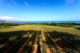 西表島 農業体験できる民宿