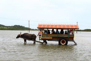 由布島の体験 水牛