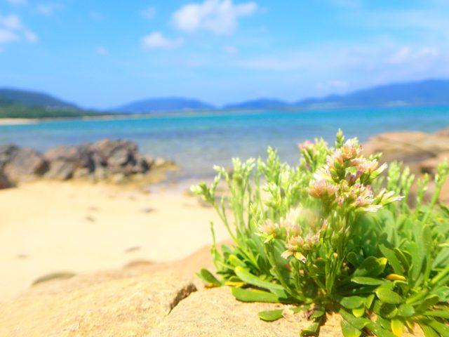 西表島竹富島の星の砂ビーチ