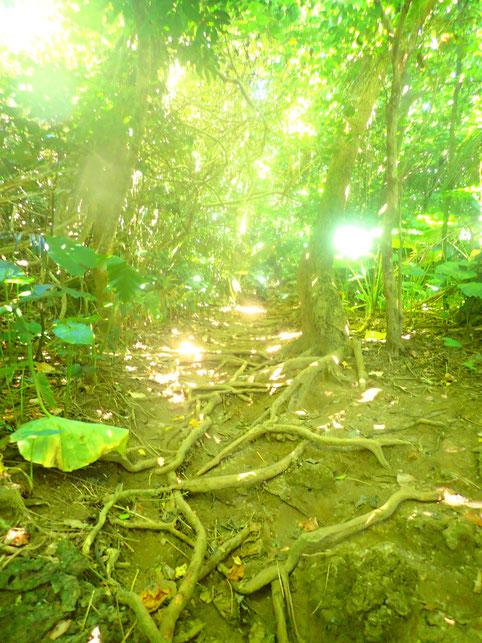 石垣のジャングル