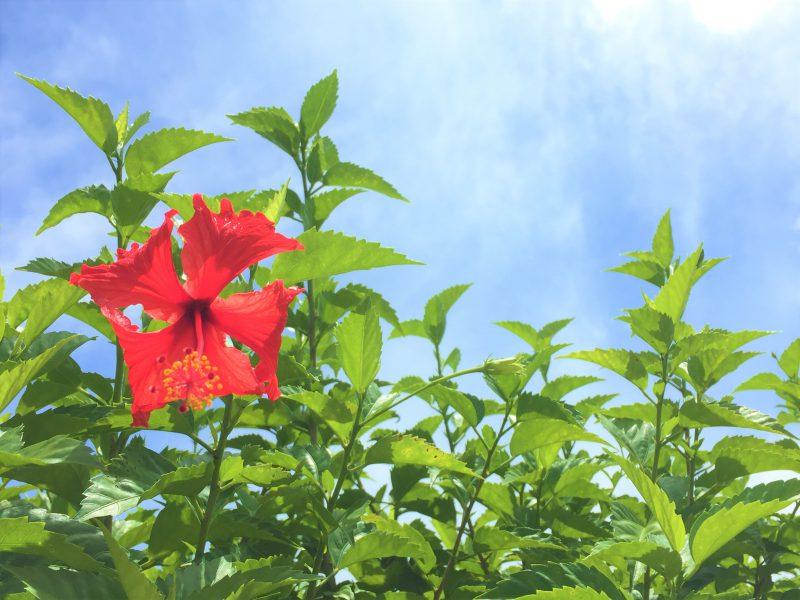 石垣島移住とお花