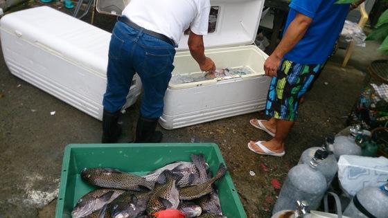 石垣島の魚達