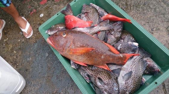 南国の魚はカラフル