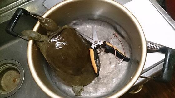 石垣島すっぽん料理