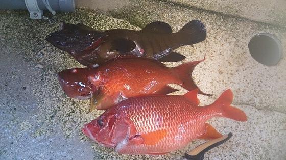 アオミーパイ、アカミーパイ、トガリエビスの高級魚
