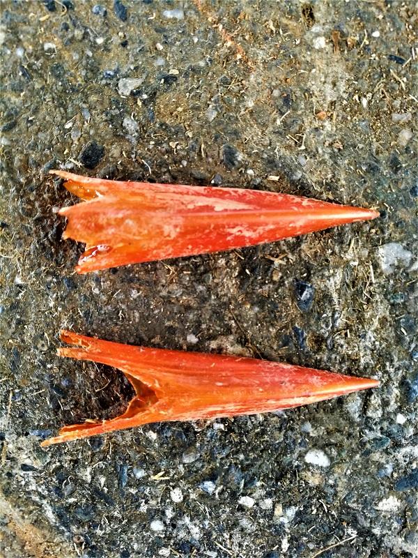 赤いクチバシ