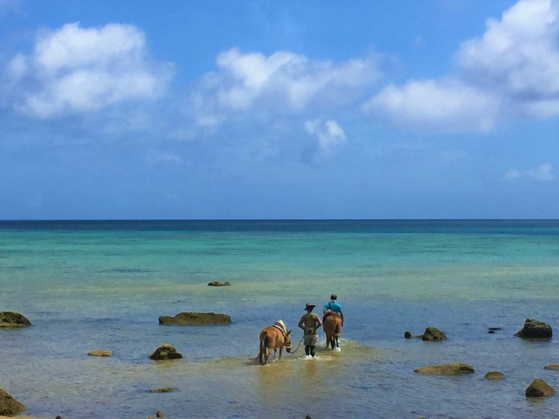 石垣島の海で馬遊び